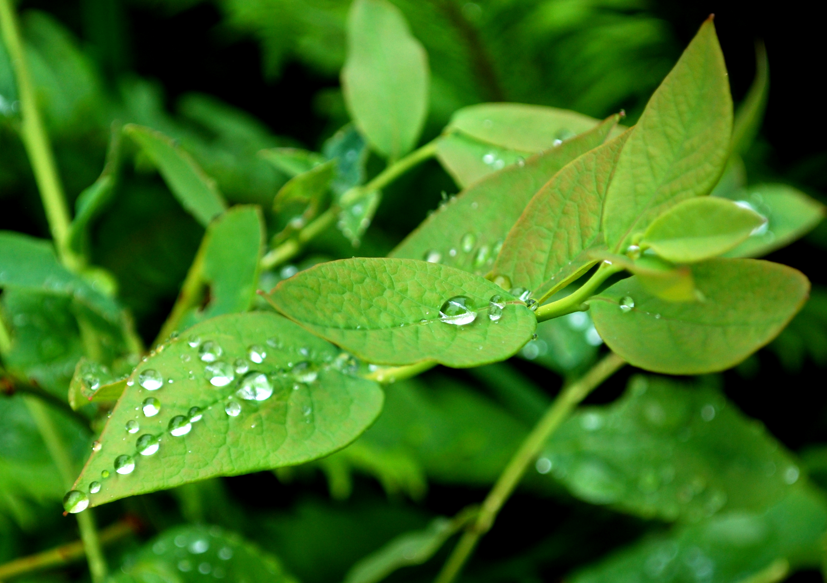Photo: Leaves with Dew