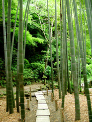 bamboo forest with stone path